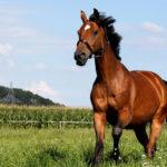 Как начать кататься на лошадях?